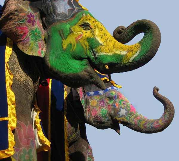 Elephant Festival Jaipur Rajasthan