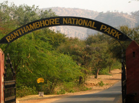 travel  ranthambore national park live9